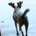A Christmas Cookie for Brando – Dog Cookies