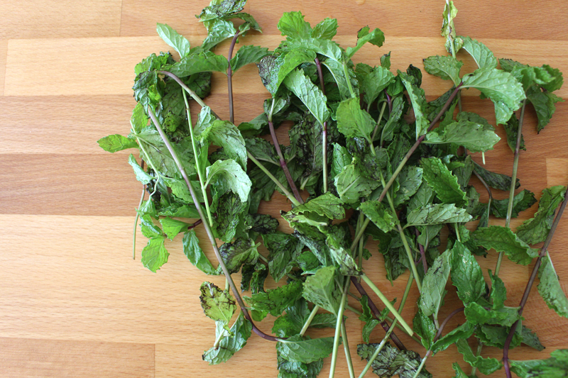 how to grow mint outside
