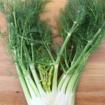 How To Use Fennel – From Bulb to Fronds