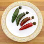 Chile Pepper Poppers