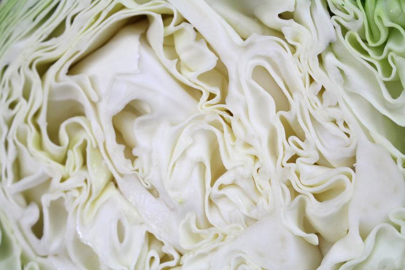 Cabbage-4